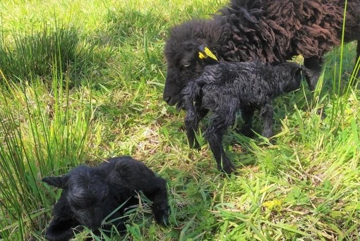 Les naissances au vallon du Creyer